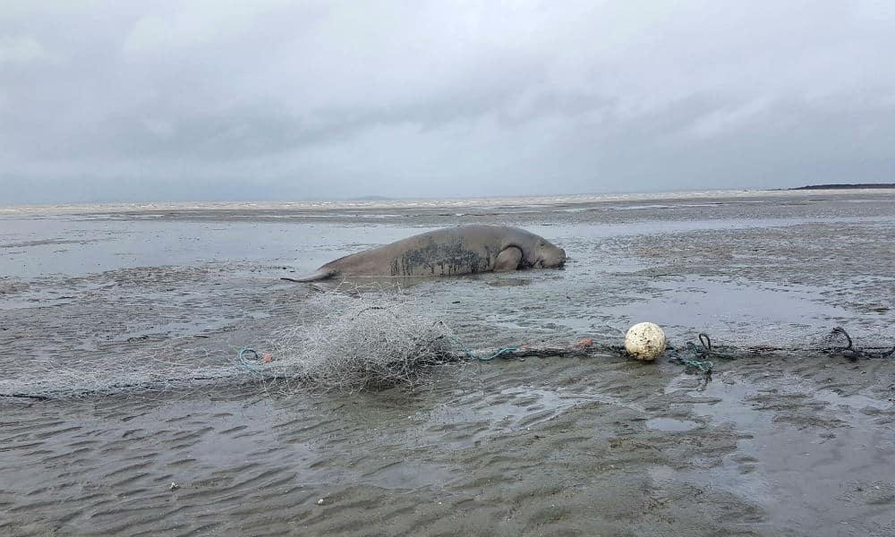 img dugong gillnet px
