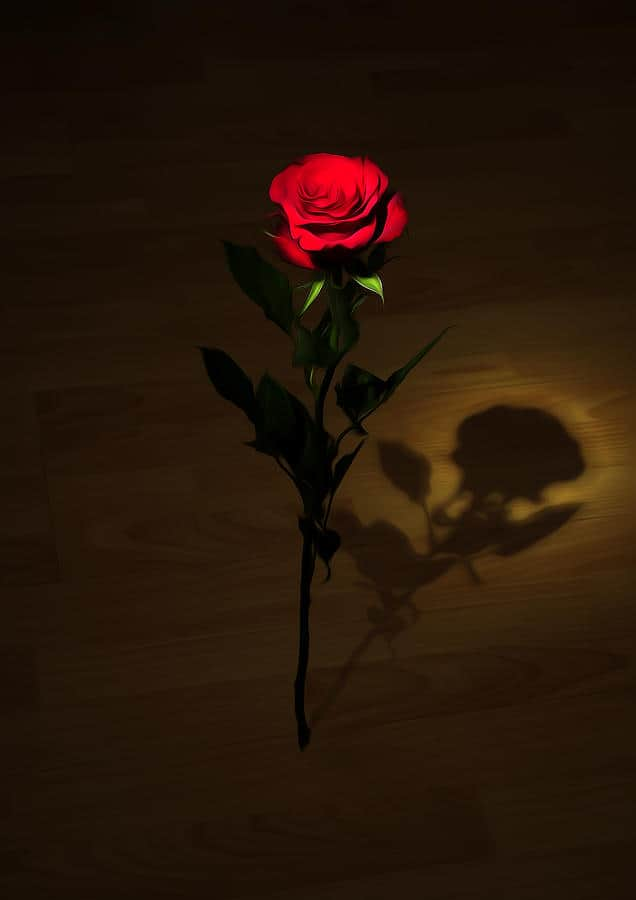 one red rose svetlana sewell