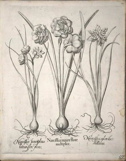 What is a Botanical Artist and Illustrator?