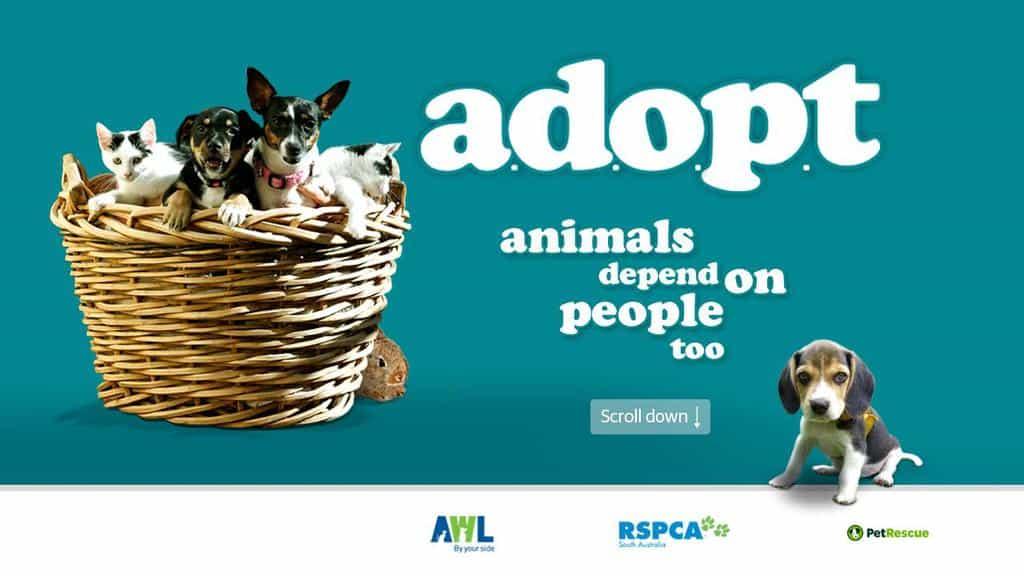 adopt top promo image
