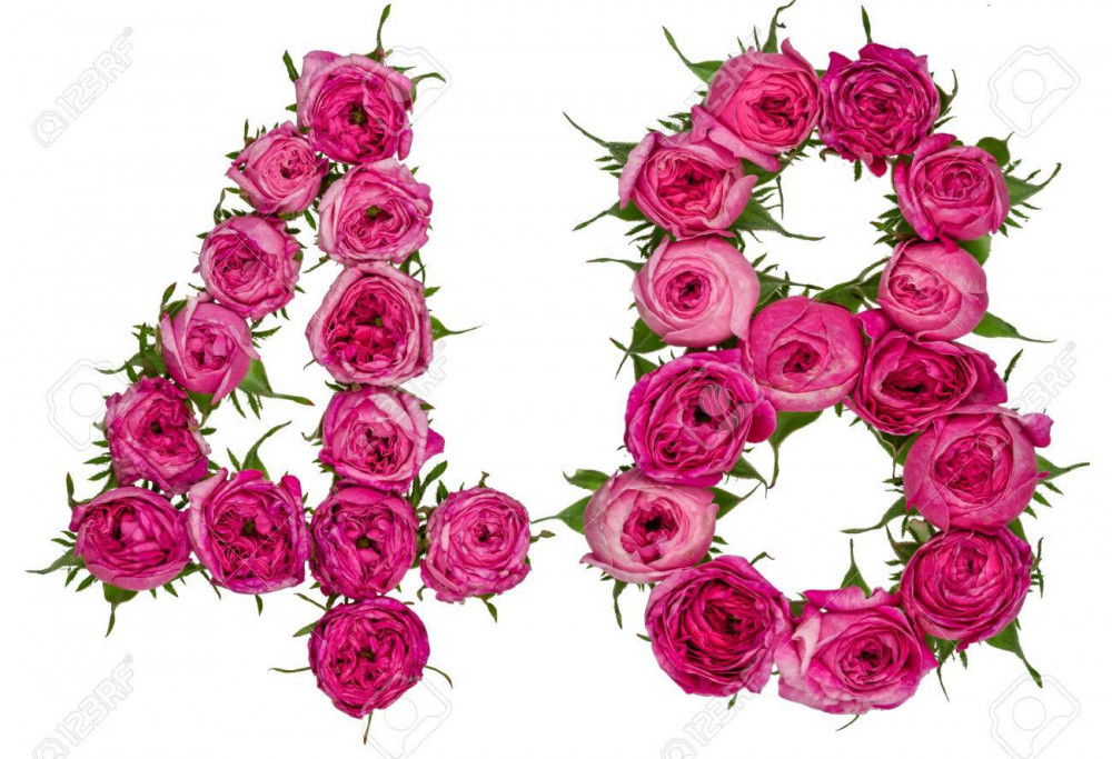 arabic numeral  forty eight from red flowers of rose isolated on white background
