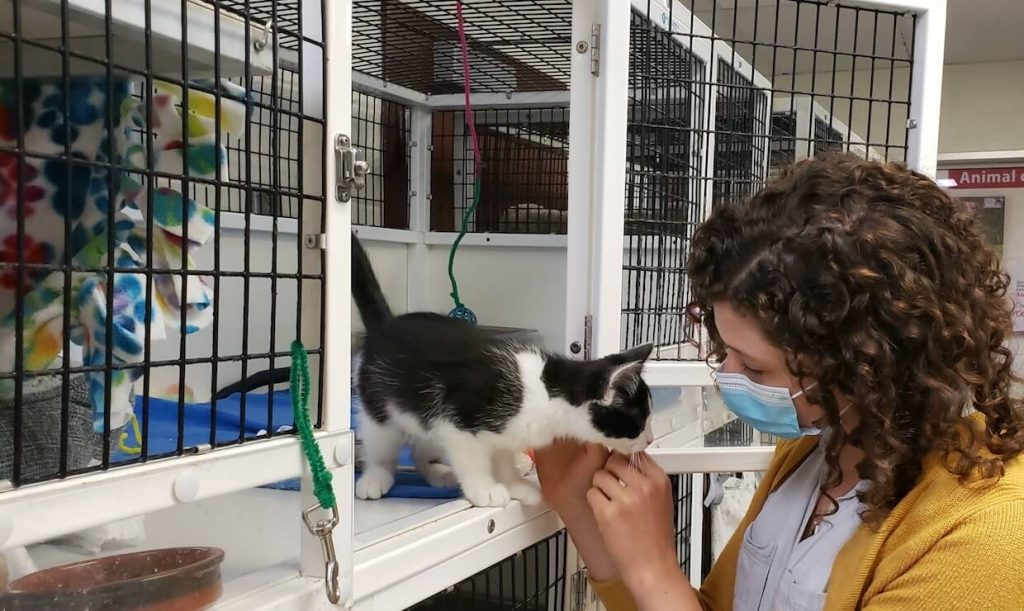 AWLA Adoptions by Appointment