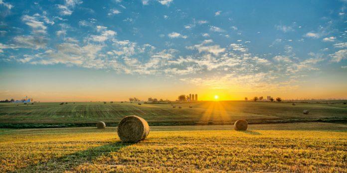 Iowa Landscape  e