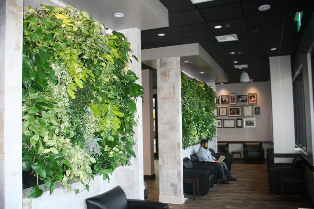 Two Tropical Indoor Living Walls