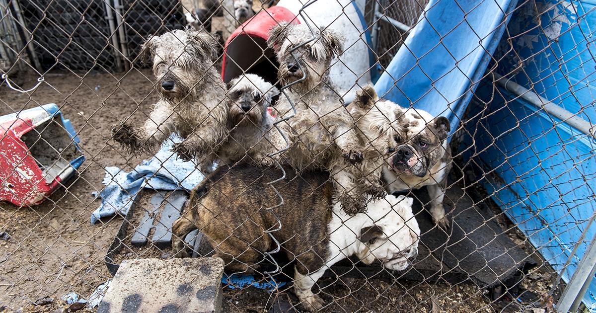 blog usda puppymills  fb