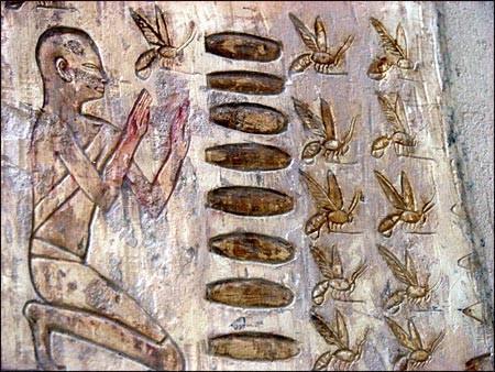 egypt antique old gravure miel honey proprietes large