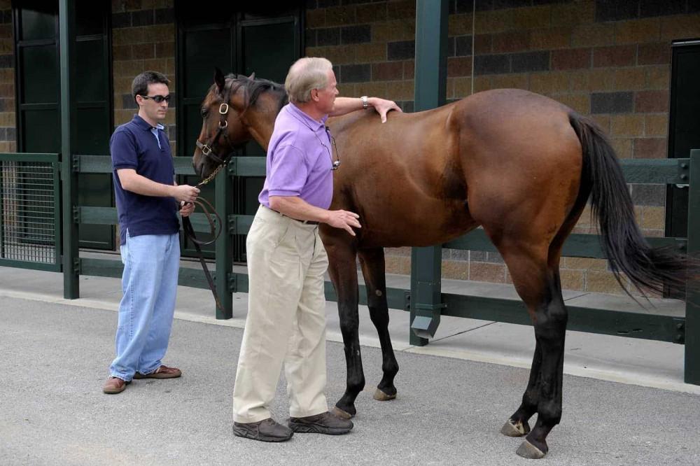 examining horses back