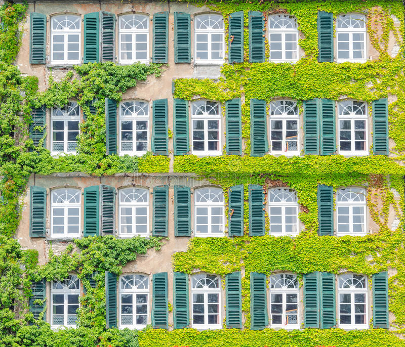 facade greening climbing plants building front ivy overgrown natural thermal insulation air conditioning