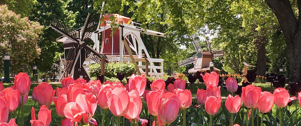 oc vibrant content slide tulipfestival