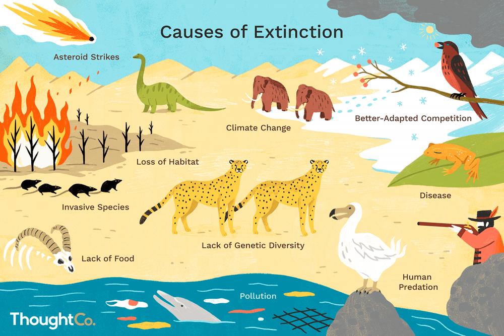 reasons animals go extinct  final dcceecddcceffd