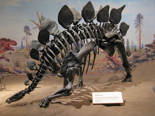 stegosaurusfossil