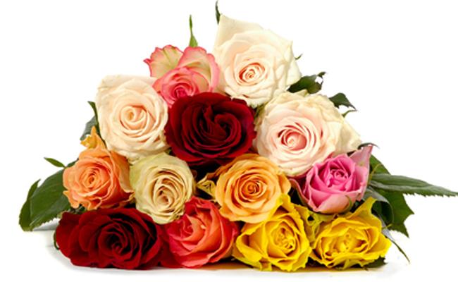 thirteen roses