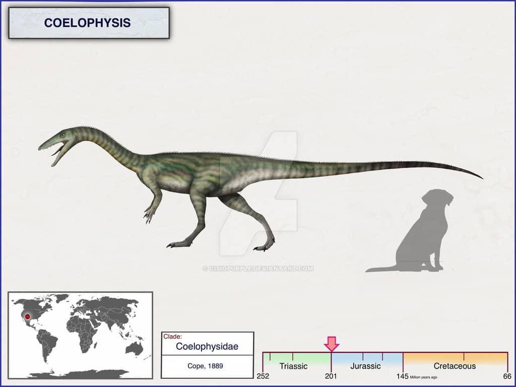 coelophysis by cisiopurple dbfnusz fullview