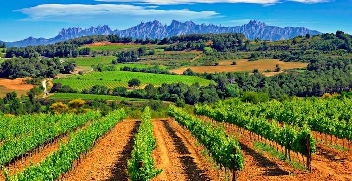 penedes wine region spain
